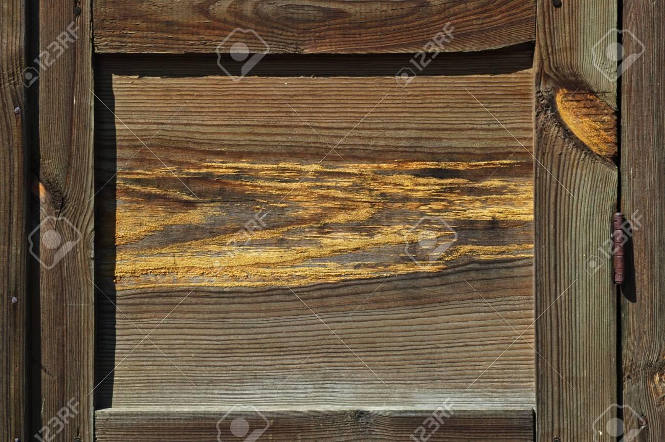 Beautiful wood texture close-up Stock Photo - 3114157