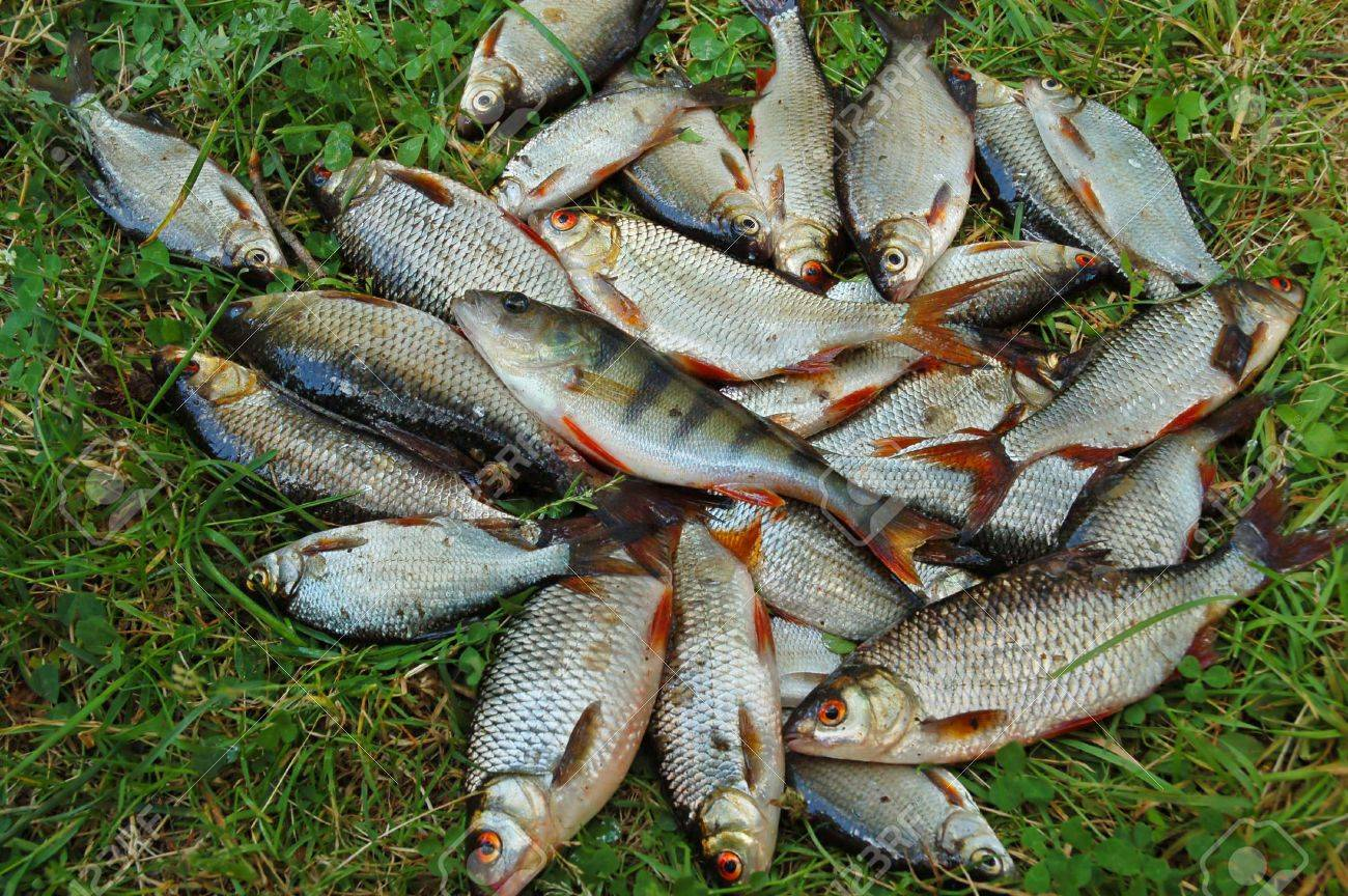 Catching Fish On Green Grass Stock Photo Picture And Royalty Free