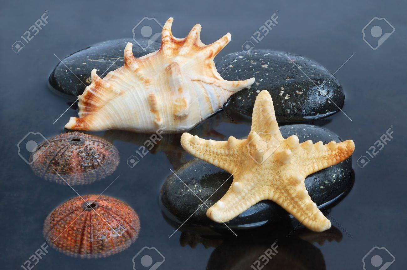 9923227-Coquillage-toiles-de-mer-et-chine-sur-la-pierre-noire-sur-fond-de-l-eau-Banque-d'images
