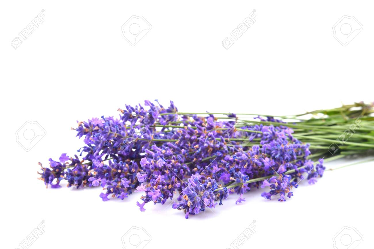 Beautiful blossoming lavender closeup on a white - 126826978