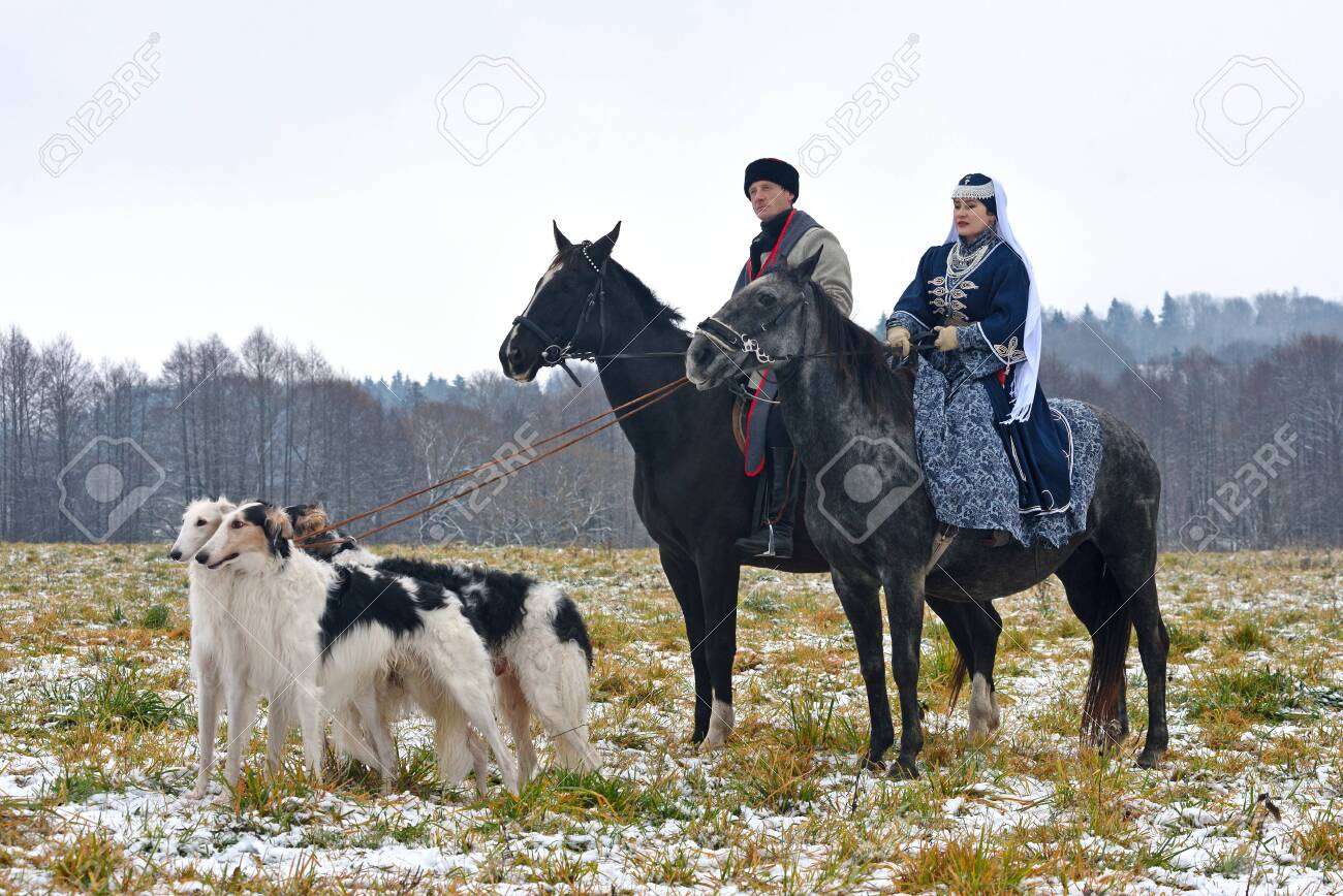 Minsk region, Belarus - November 5: Historical reconstruction of the traditional hunting with russian borzoi dogs. November 5, 2016, Belarus - 139050175