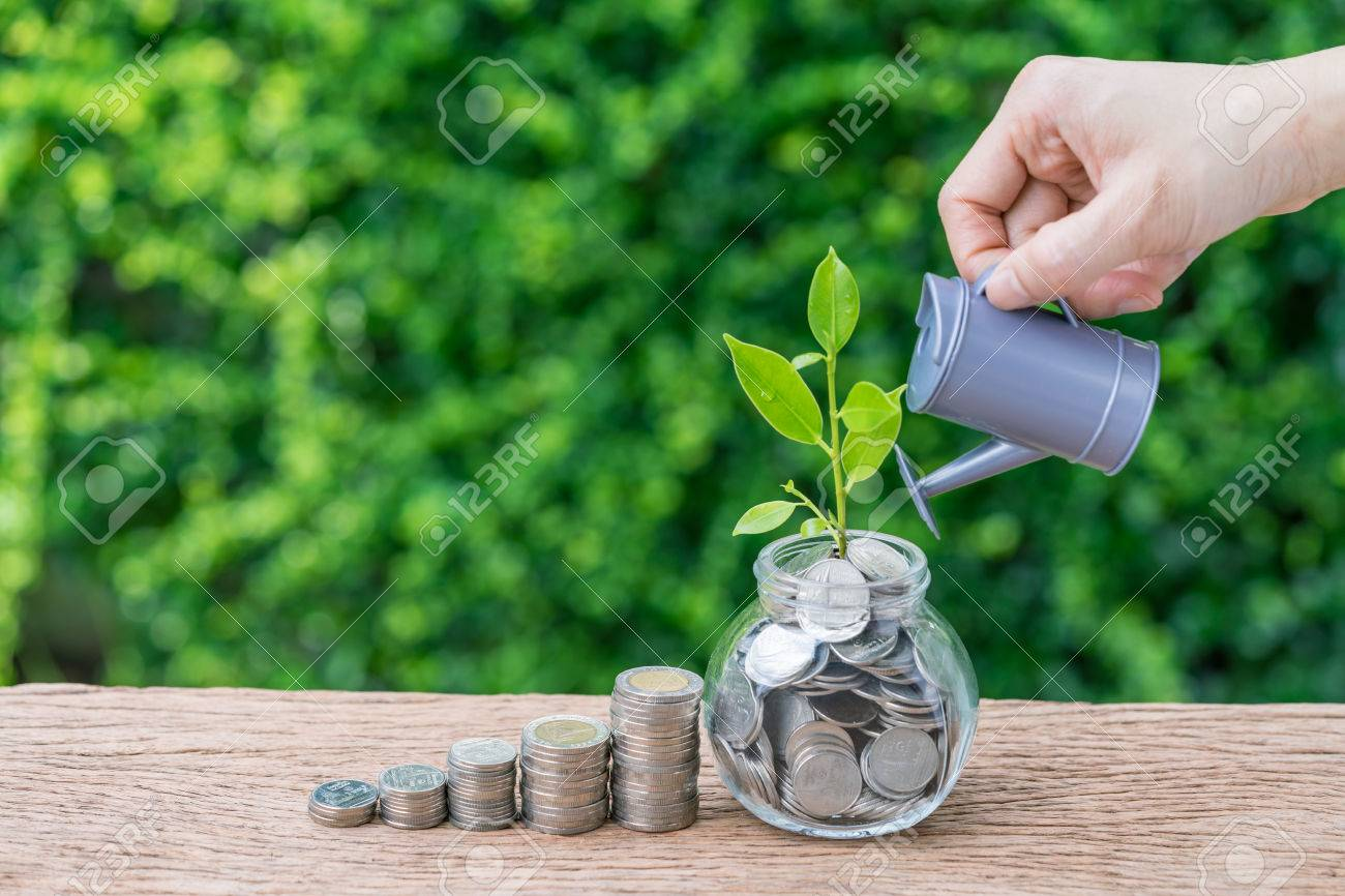 Stack of coins and growth sprout plant with hand watering as business finance or grow investment concept. - 84226126