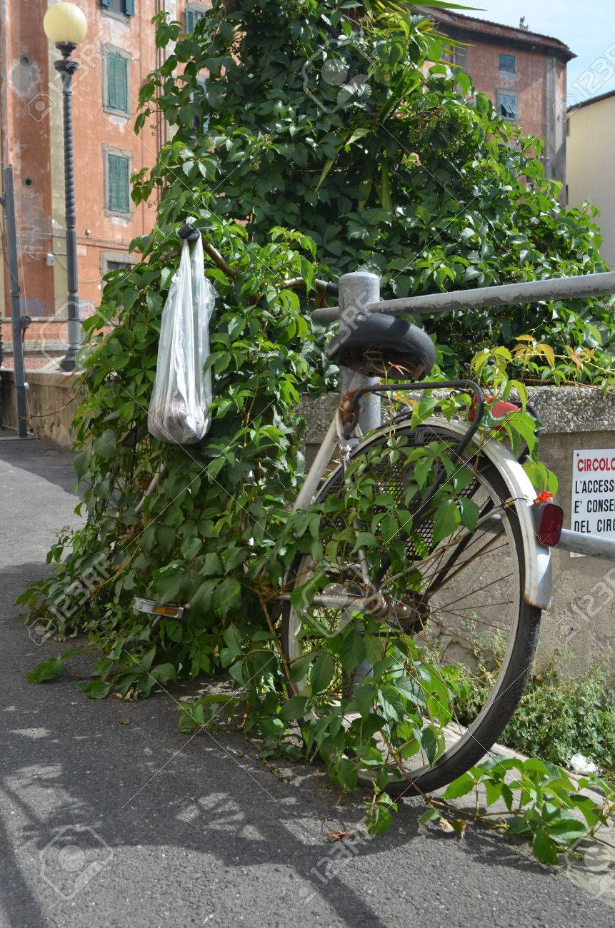 An abandoned bike overgrown with a vine Stock Photo - 75155469