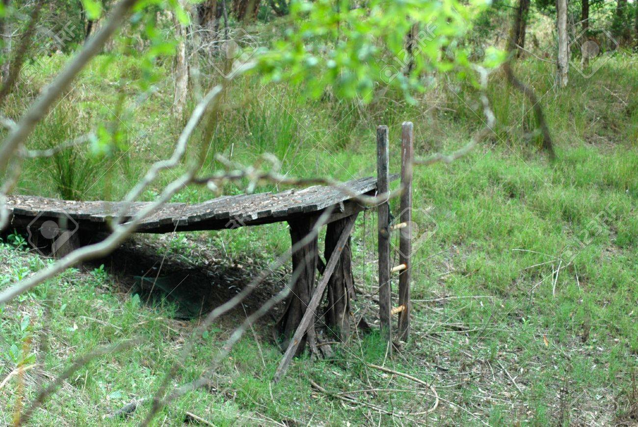 An Old Wooden Pier In The Middle Of A Forest A Ladder Leads Stock