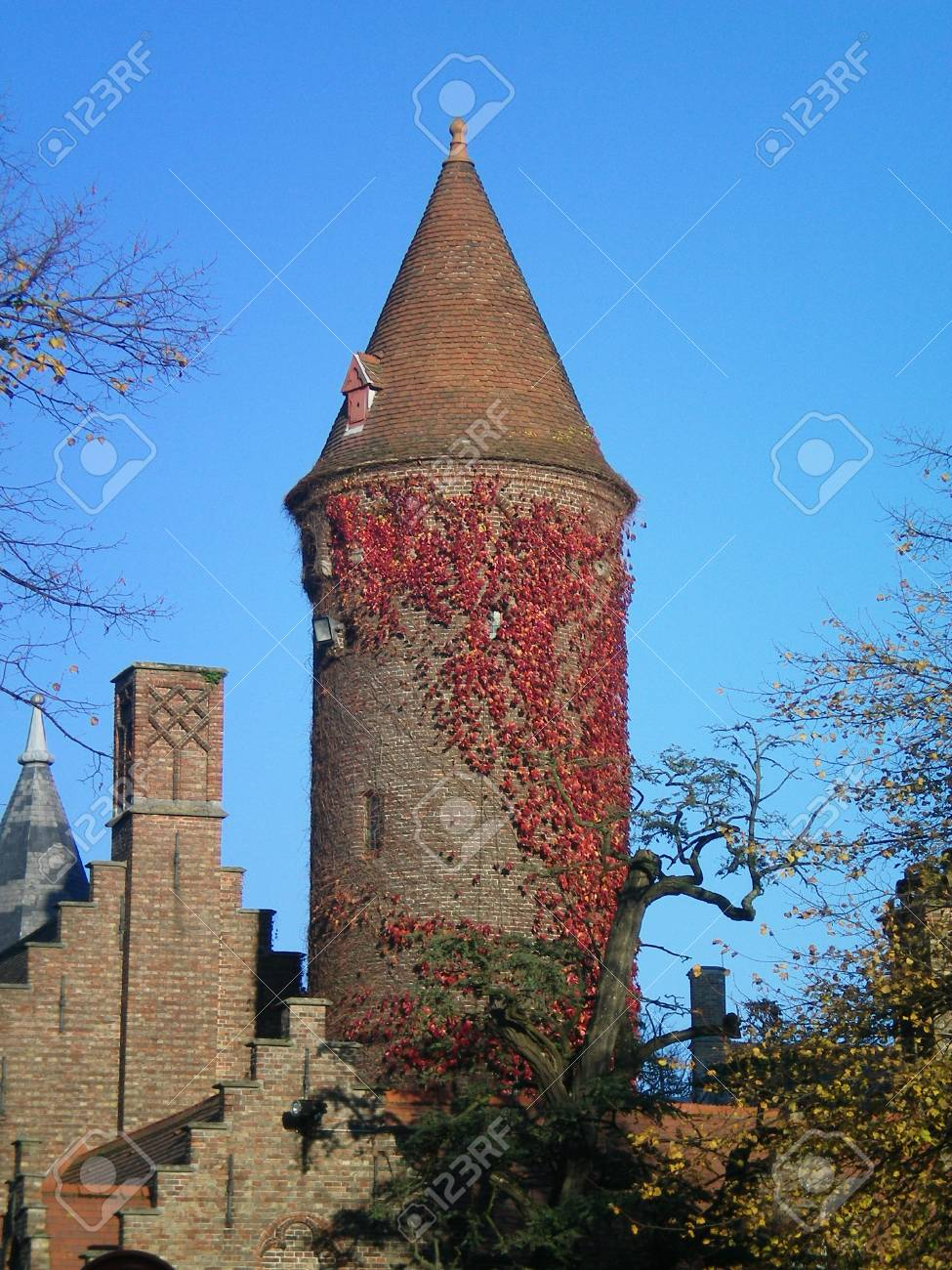 A tower of brick, with a pointed roof and covered with red vines. It stands against a clear blue sky, with some trees in the foreground. Other buildings, with stepped roofline, are nearby. Stock Photo - 92175219