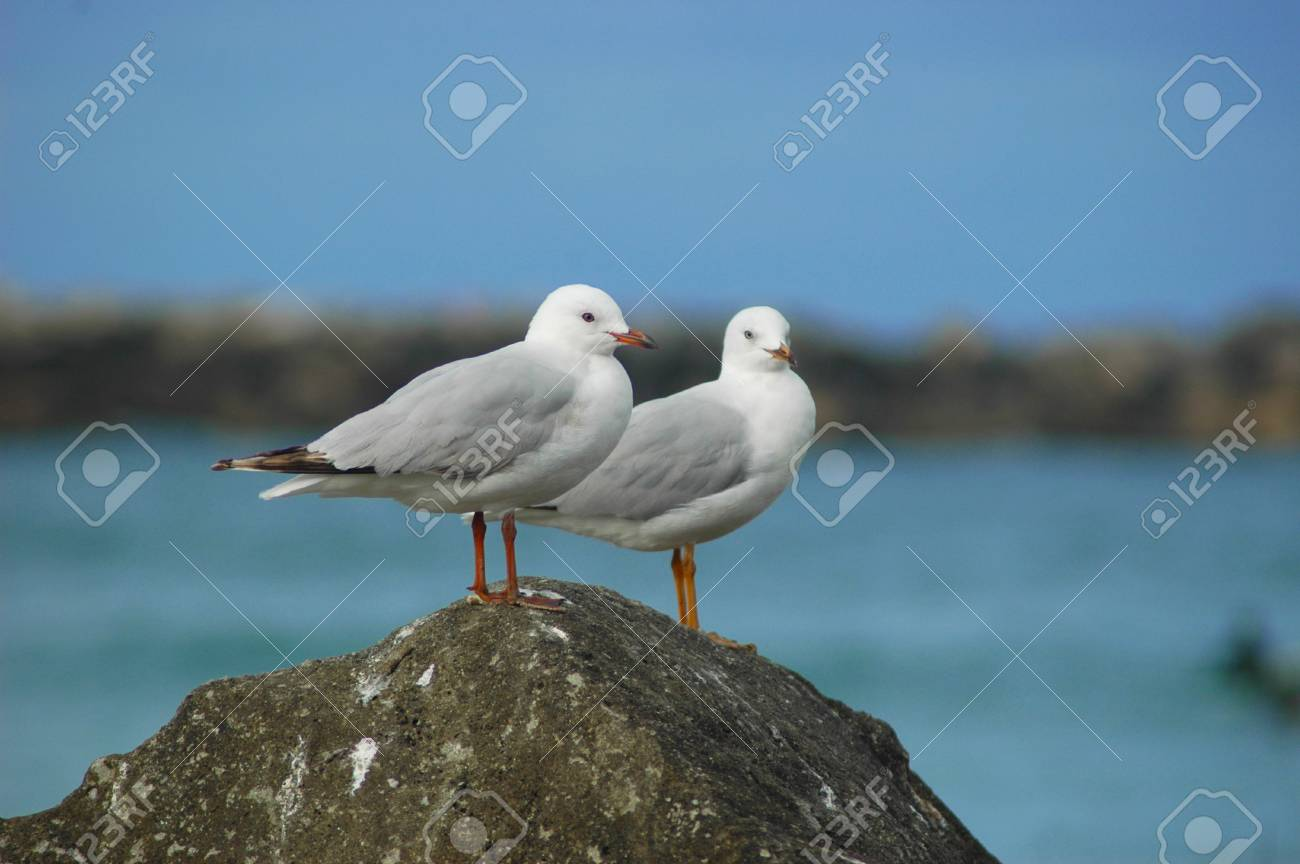 A close-up of two seagulls standing on a rock. The sea with the beach is behind them. The sky is blue with no clouds. Stock Photo - 92545987