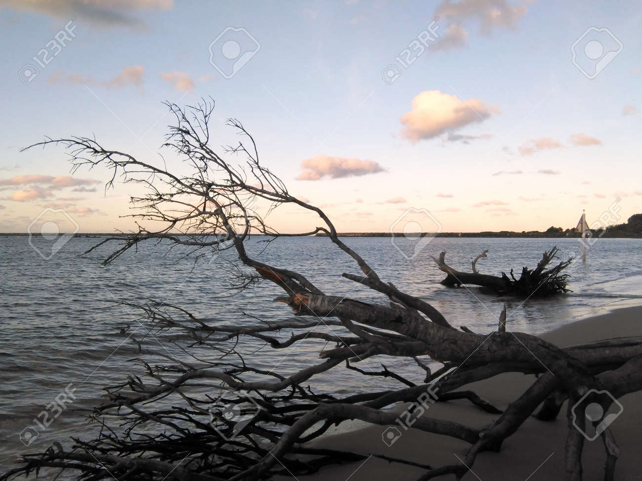 The dark branches and trunk of a fallen tree are seen against the colours of a cloudy sky at sunset. Another tree trunk has been washed onto the beach. A tree-covered headland is the distance. - 171098743