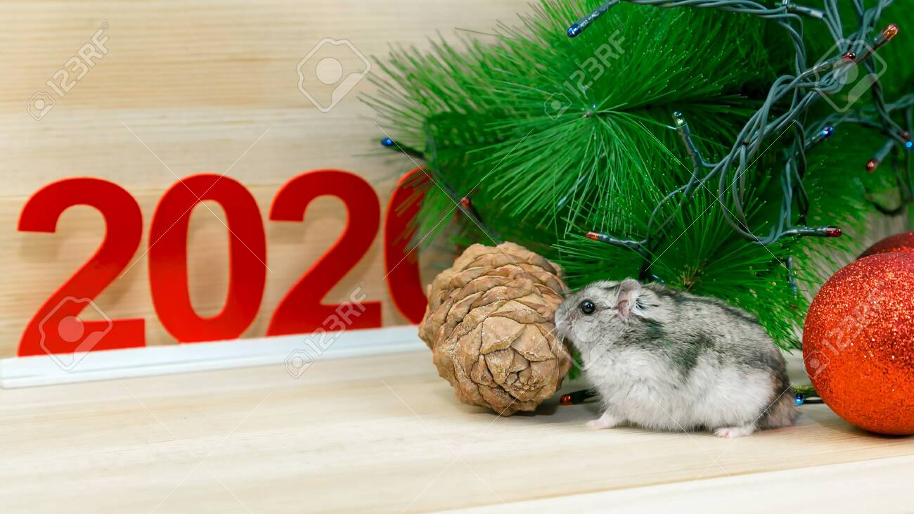 Home Runs 2020.A Gray Mouse Runs Around A Christmas Tree Branch And Numbers