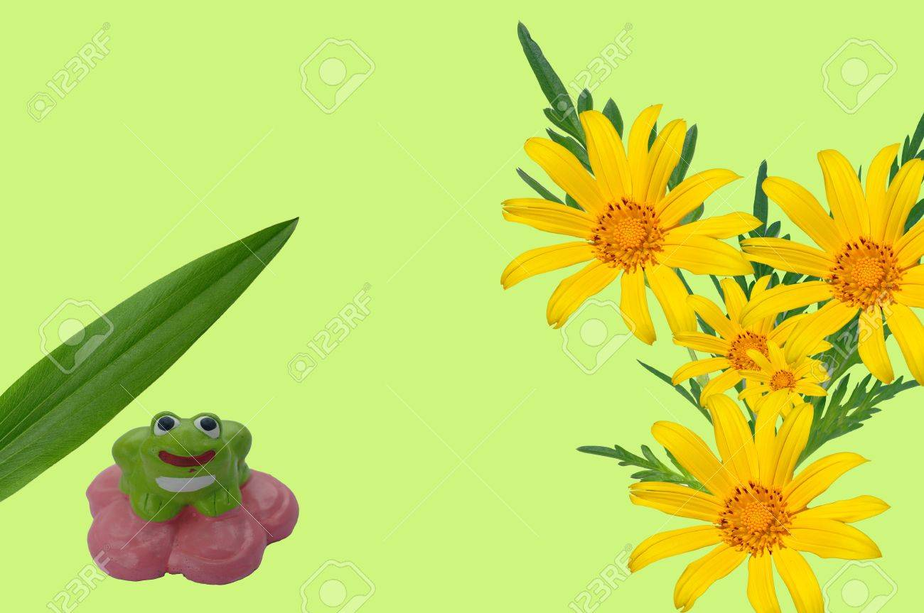 Frog and flower Stock Photo - 13596386