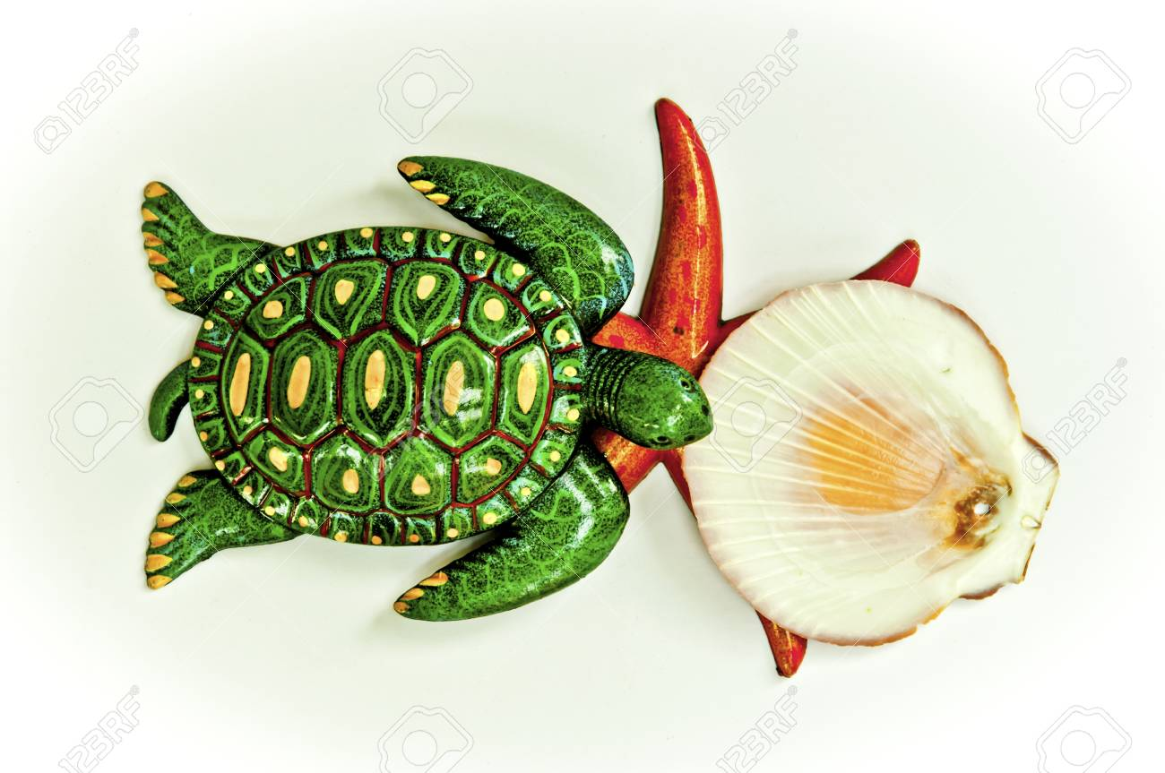 Texture turtle starfish and shell arranged by concepts Stock Photo - 17870205