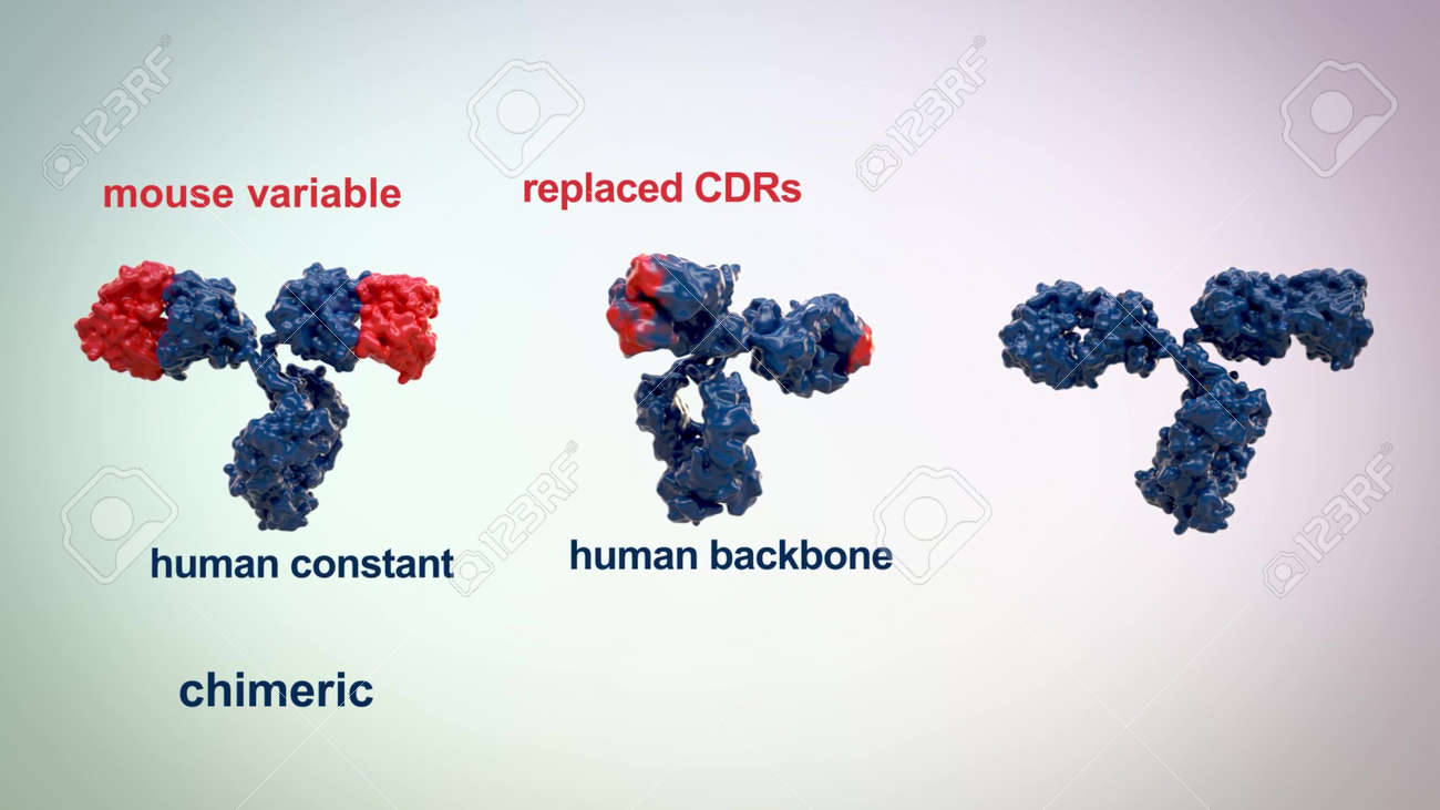medically accurate 3d animation of an antibody - 165577080