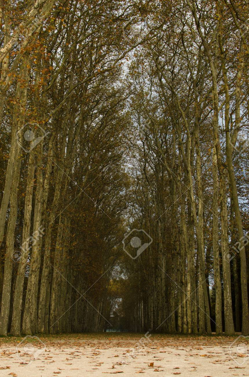 Path with high trees in autumn Stock Photo - 22189605
