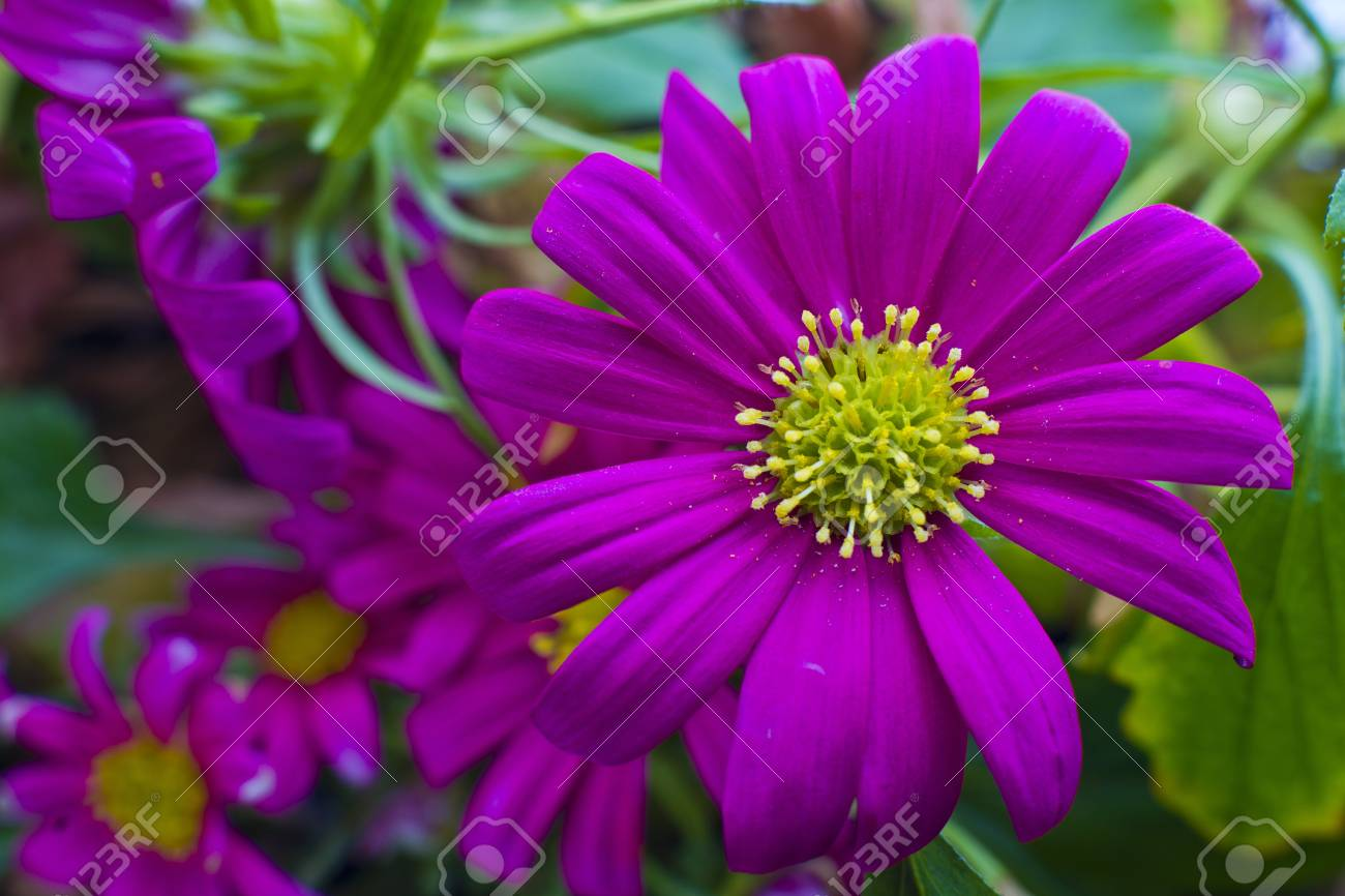 Flower - 22063916