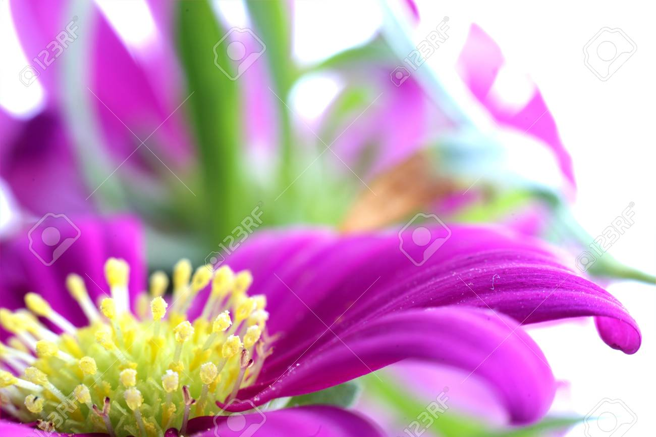 Flower - 22063919
