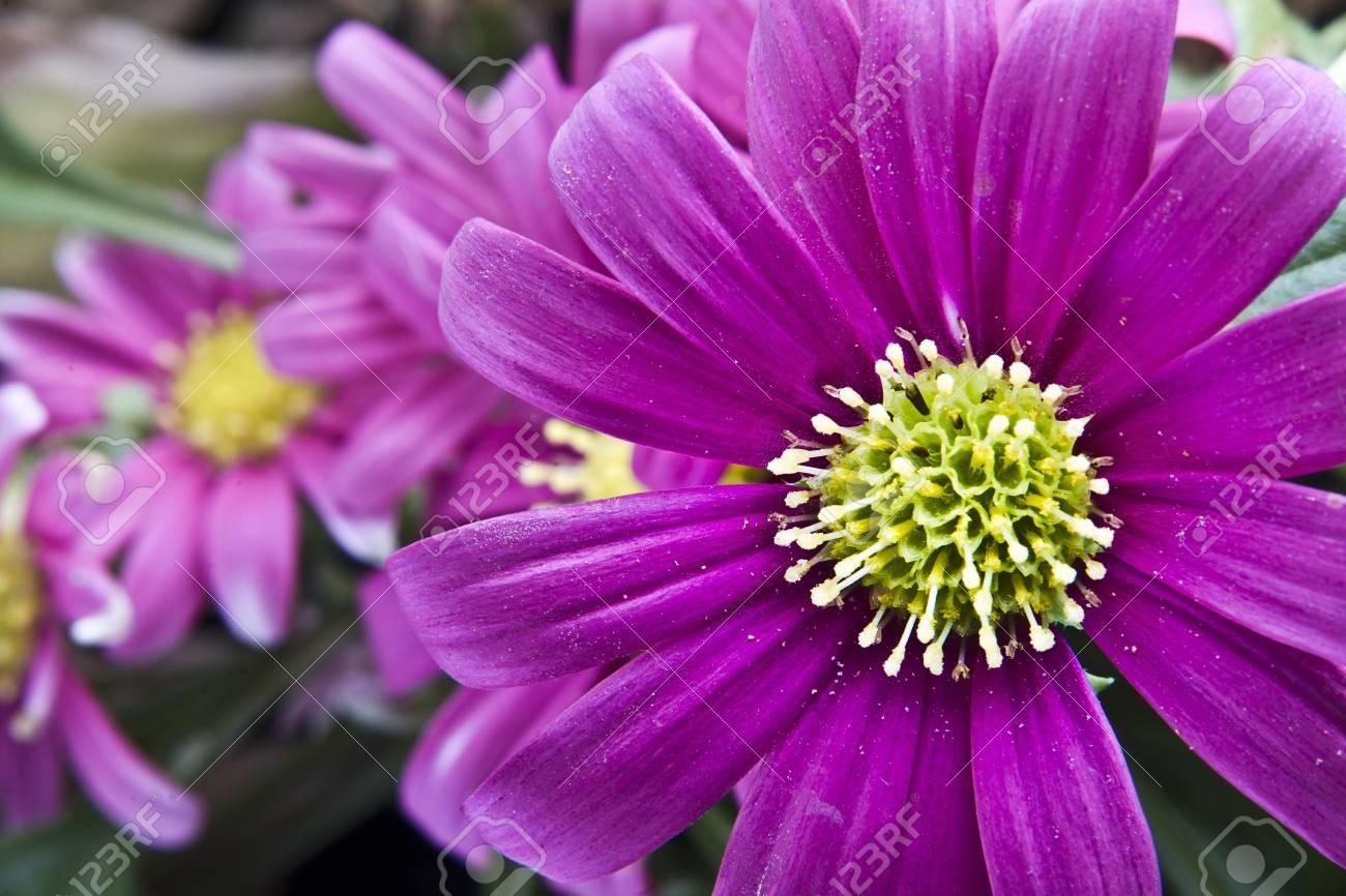 Flower - 22063921