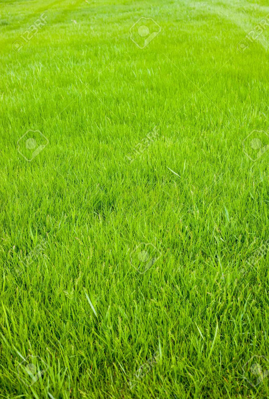Fresh cut green grass background