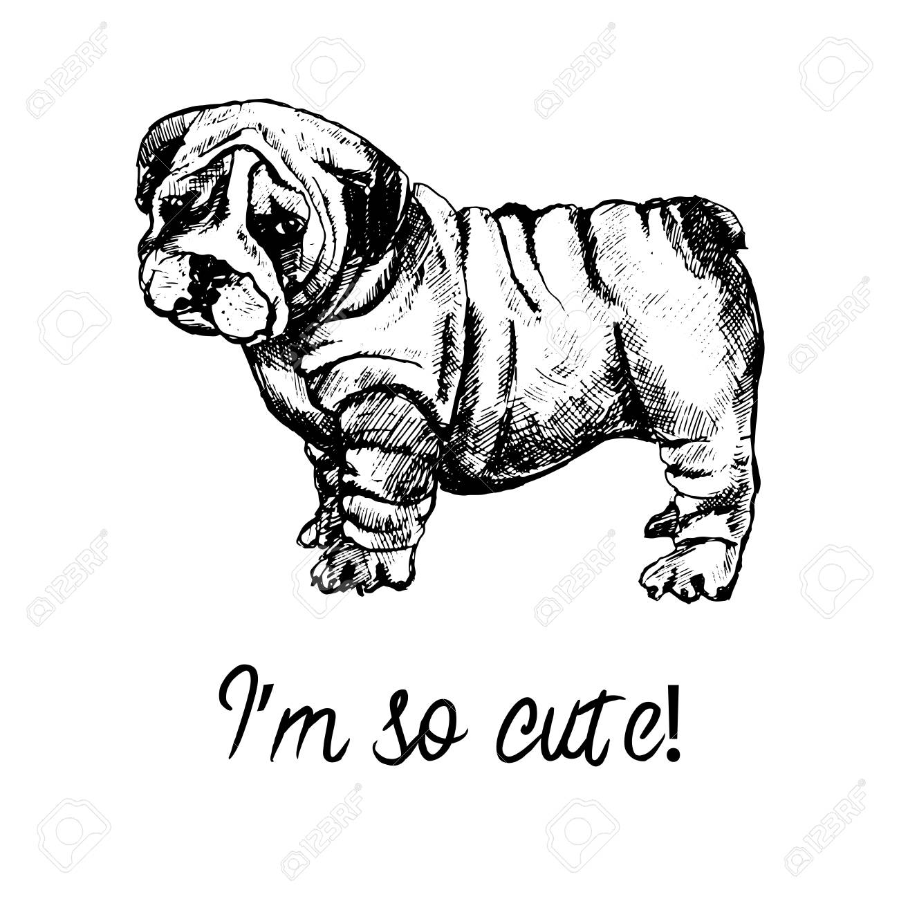 Hand Drawn Sketch Style English Bulldog Puppy Vector Illustration Royalty Free Cliparts Vectors And Stock Illustration Image 93313172