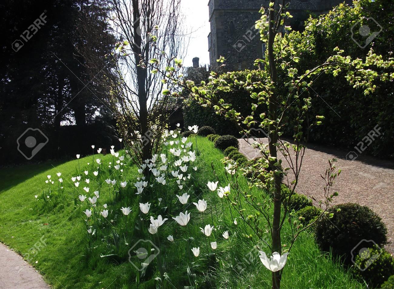 British flower border with grass white flowers and small trees british flower border with grass white flowers and small trees early spring stock photo mightylinksfo