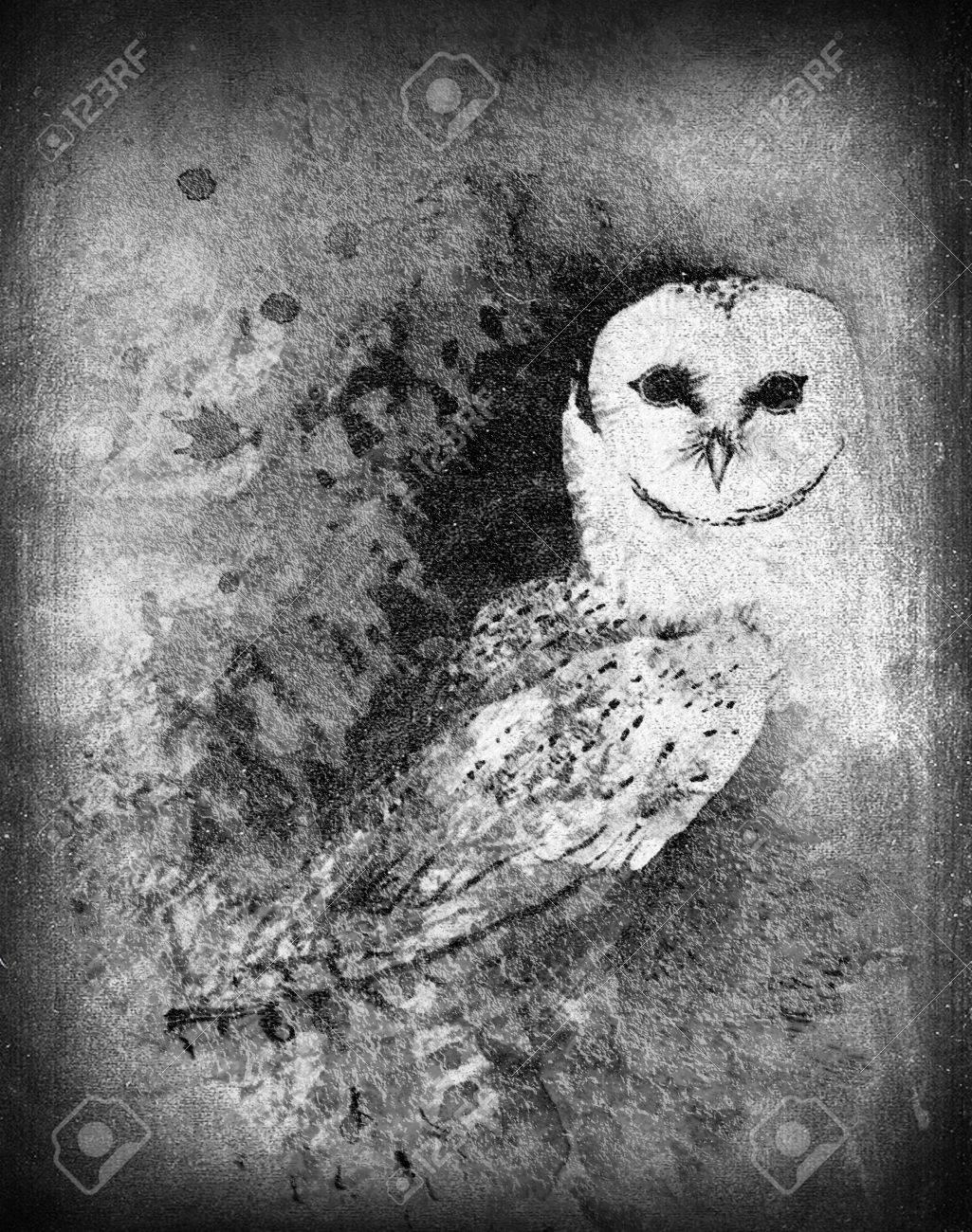 Barn owl illustration black and white sort of chalkboard style stock illustration