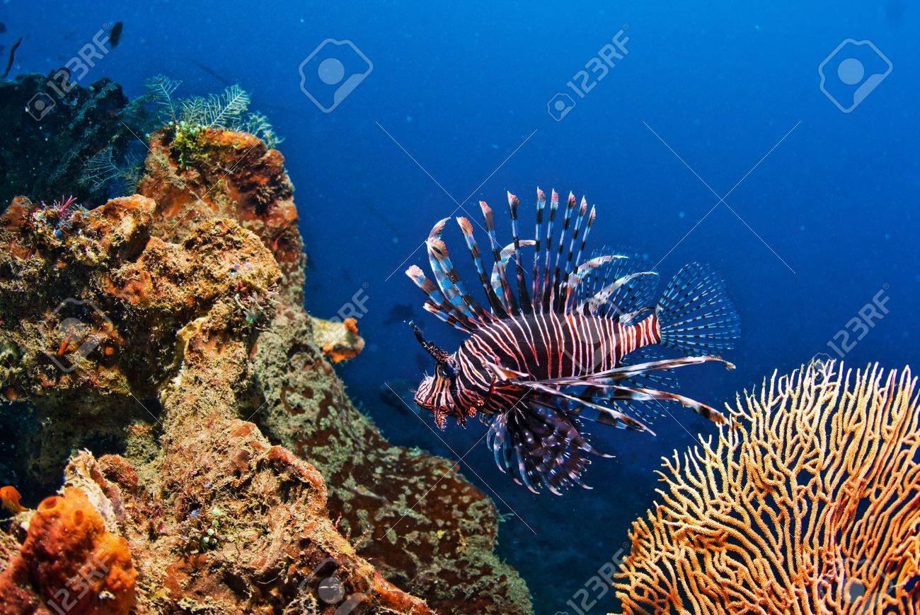 Underwater coral, fish, and plants Bali, Indonesia Stock Photo - 16125458