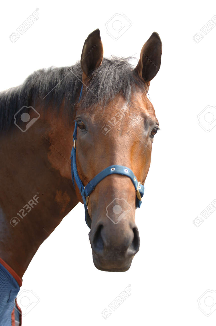 Showjumping Horse Stock Photo - 8011370
