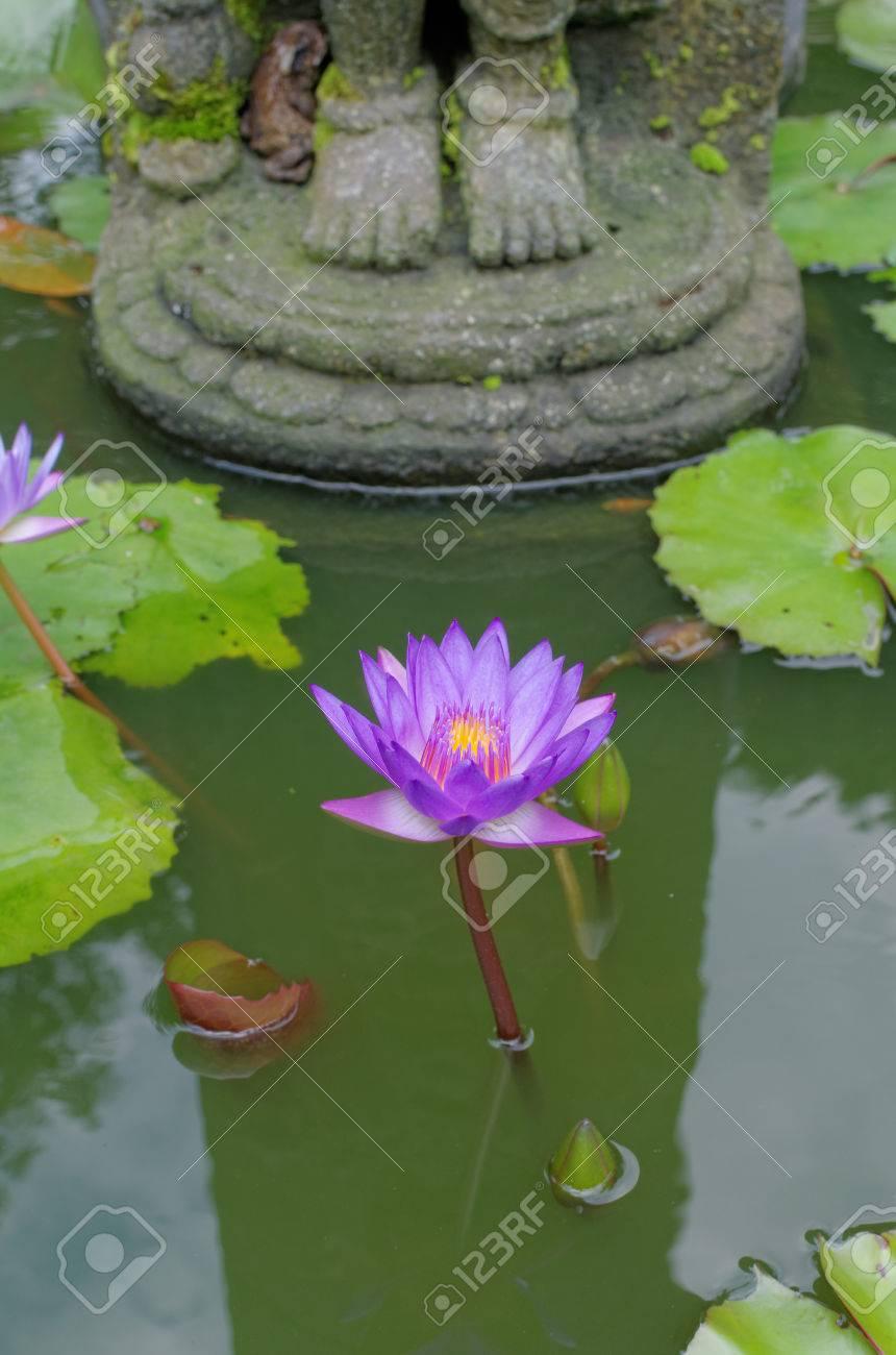 Lotus flower under buddhas feet in mendut buddhist monastery stock lotus flower under buddhas feet in mendut buddhist monastery stock photo 57269830 mightylinksfo