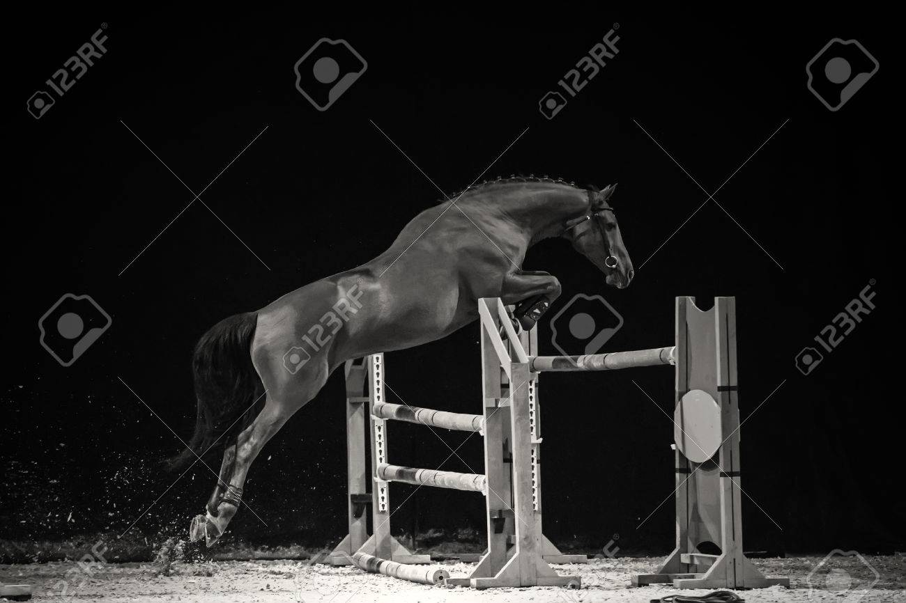 Black And White Photo Of Jumping Horse Stock Photo Picture And Royalty Free Image Image 40414386