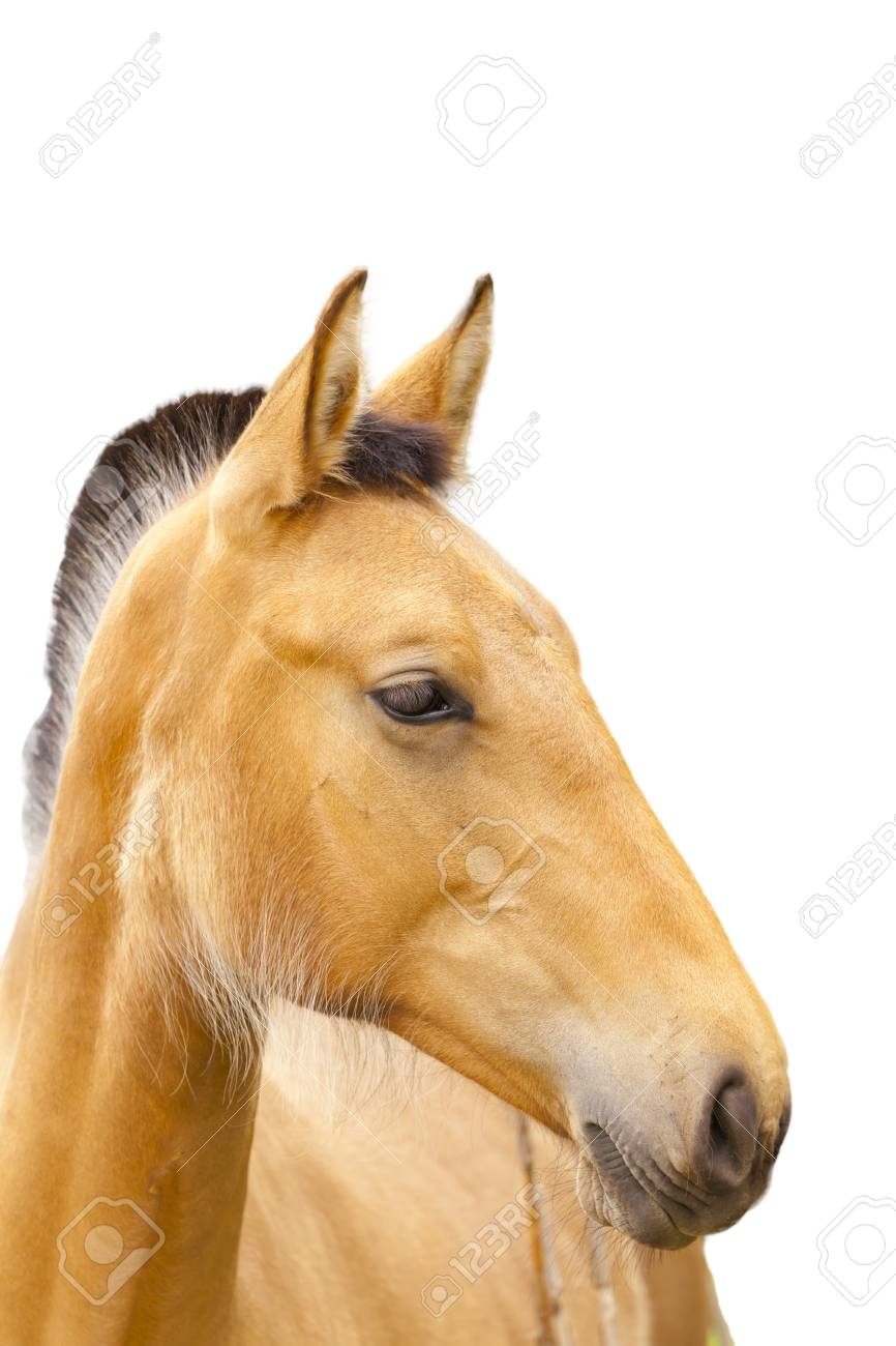 Closeup Of A Beautiful Horse Head Stock Photo Picture And Royalty Free Image Image 14790613