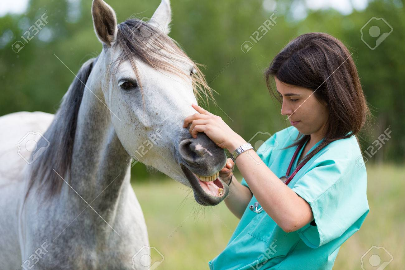 Veterinary great performing a scan to a young mare - 40342677