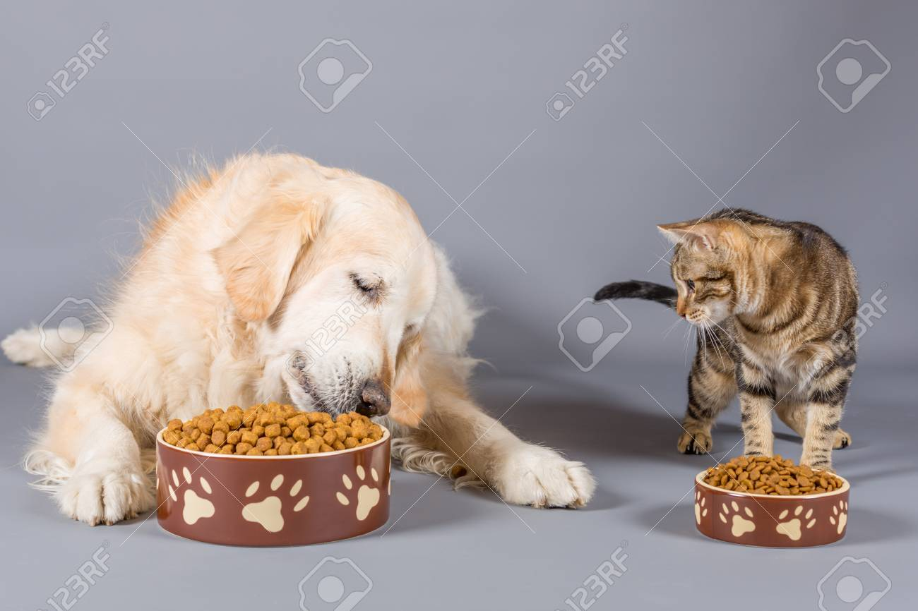 Dog and cat eating dry food in bowls - 93567862