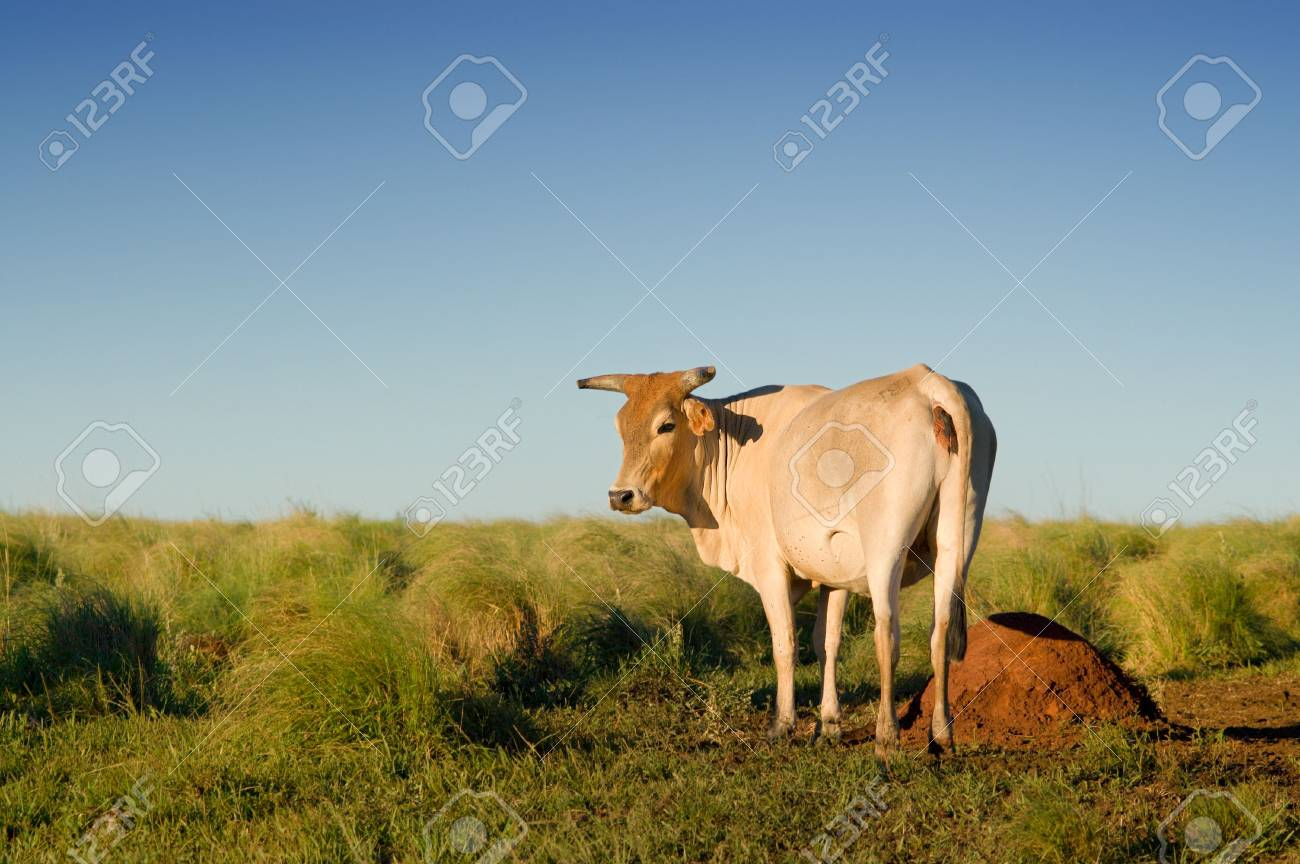 Cow in the field Stock Photo - 3233221