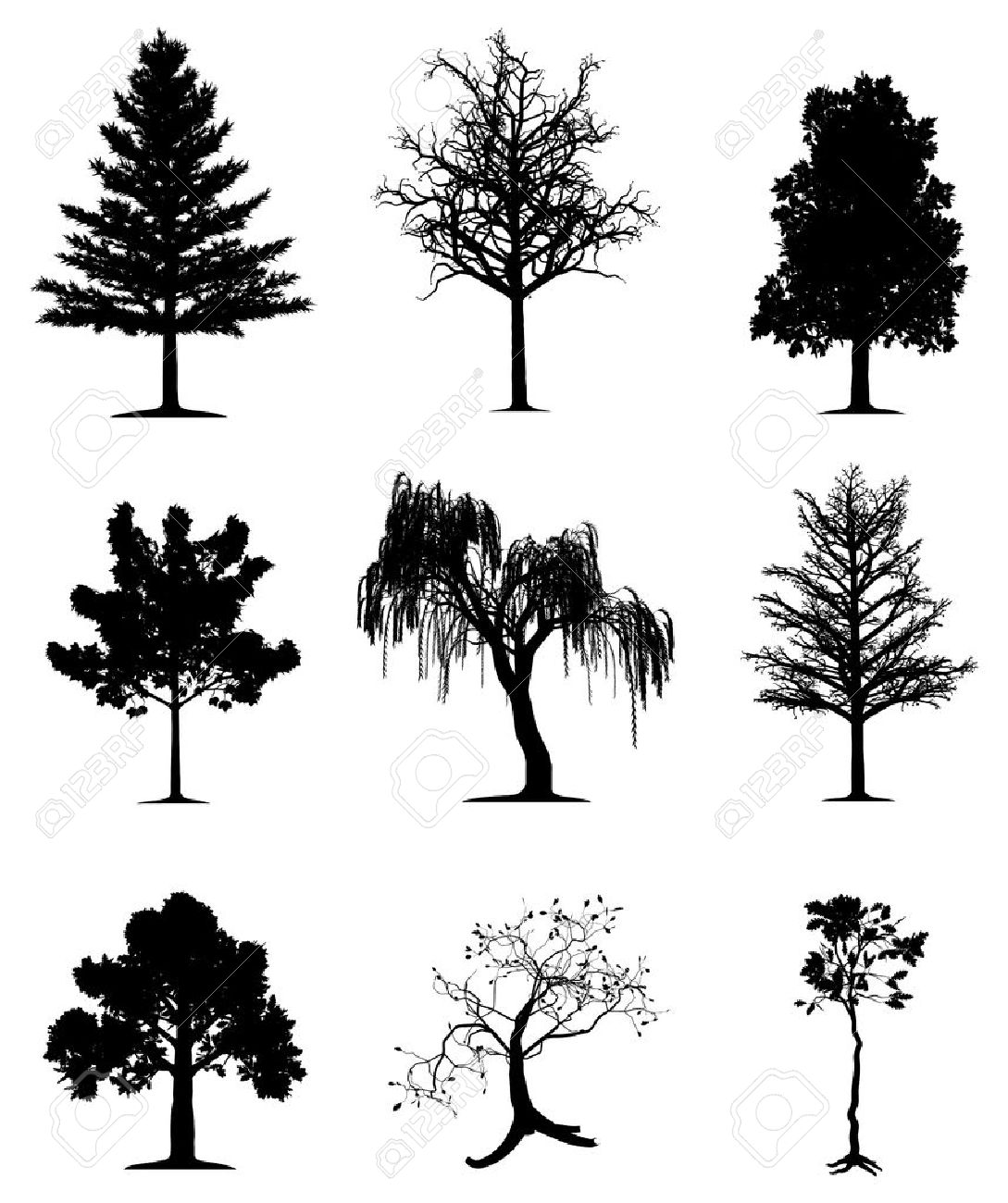 Trees collection Stock Vector - 6719673