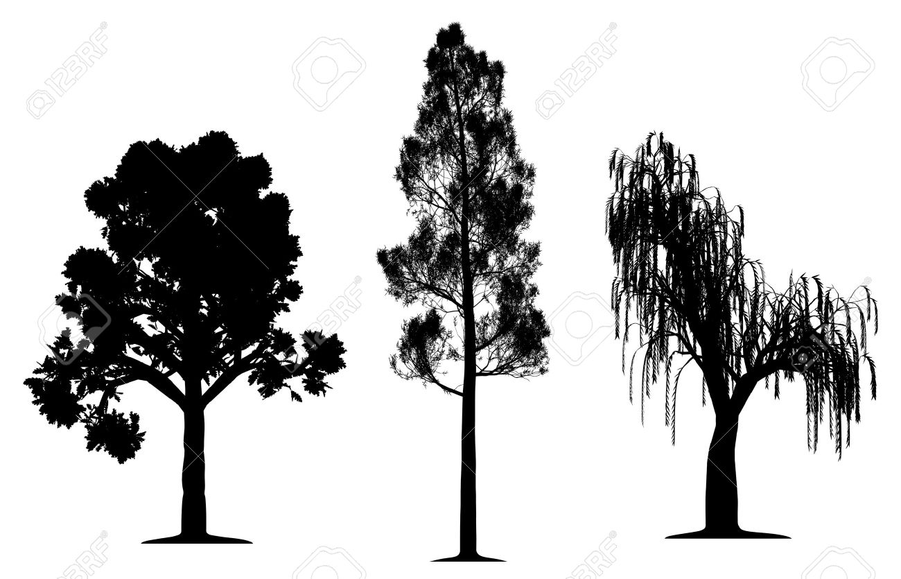 2 108 willow tree stock illustrations cliparts and royalty free