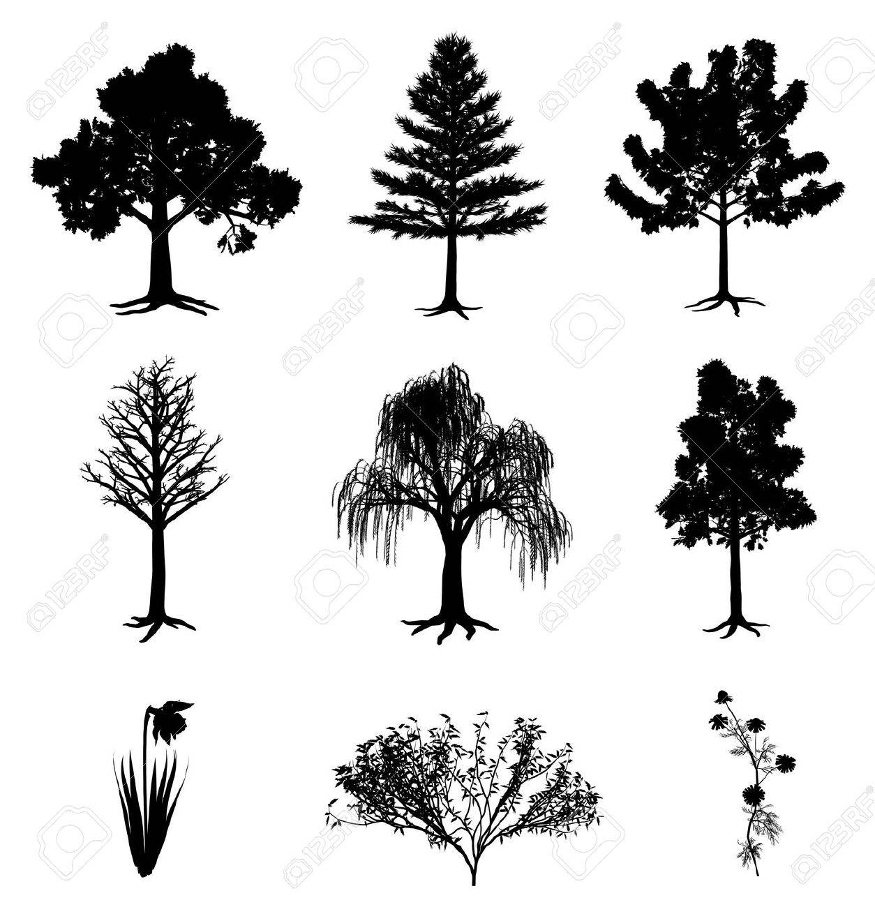 Trees narcissus chamomile and bush Stock Vector - 9333602