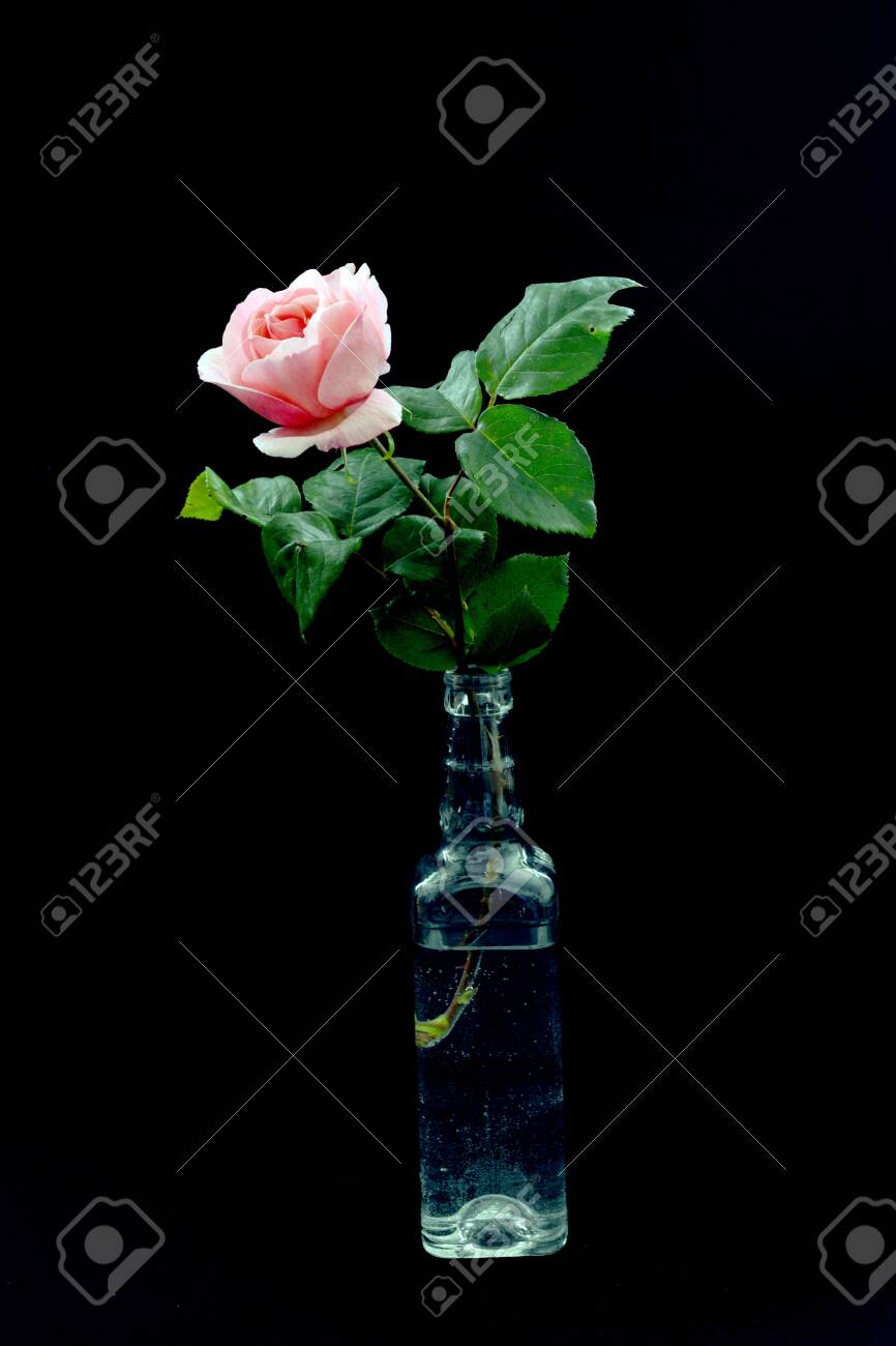 One Beautiful Rose In A Transparent Bottle Is A Very Beautiful Stock Photo Picture And Royalty Free Image Image 147819215