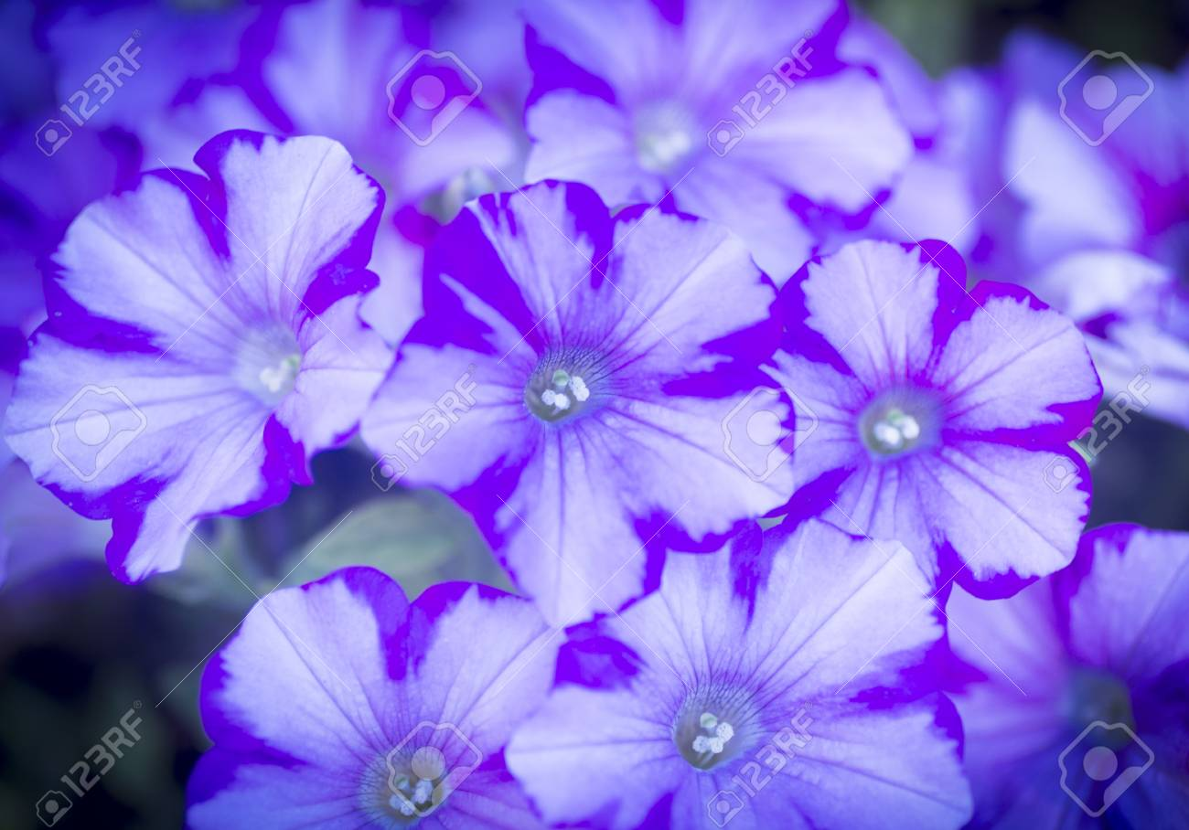 Photo Of Purple Light Blue And White Flowers In Artistic Colour