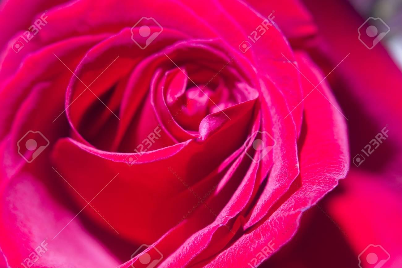 Ramo De Flores De Primavera Y Bonitas Rosas Rojas En Montón En La Tienda De Floristería A La Venta