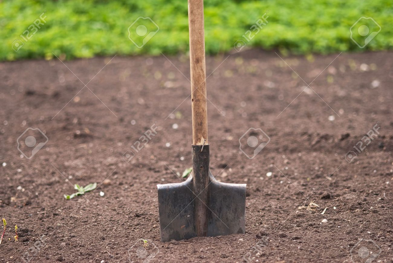 Old Garden Shovel Is Ready For Use Stock Photo Picture And