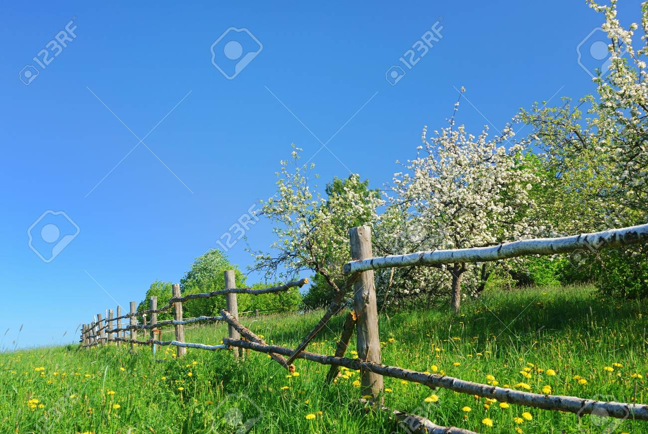 Blossom apple tree  in  green field with dandelions Stock Photo - 4988110