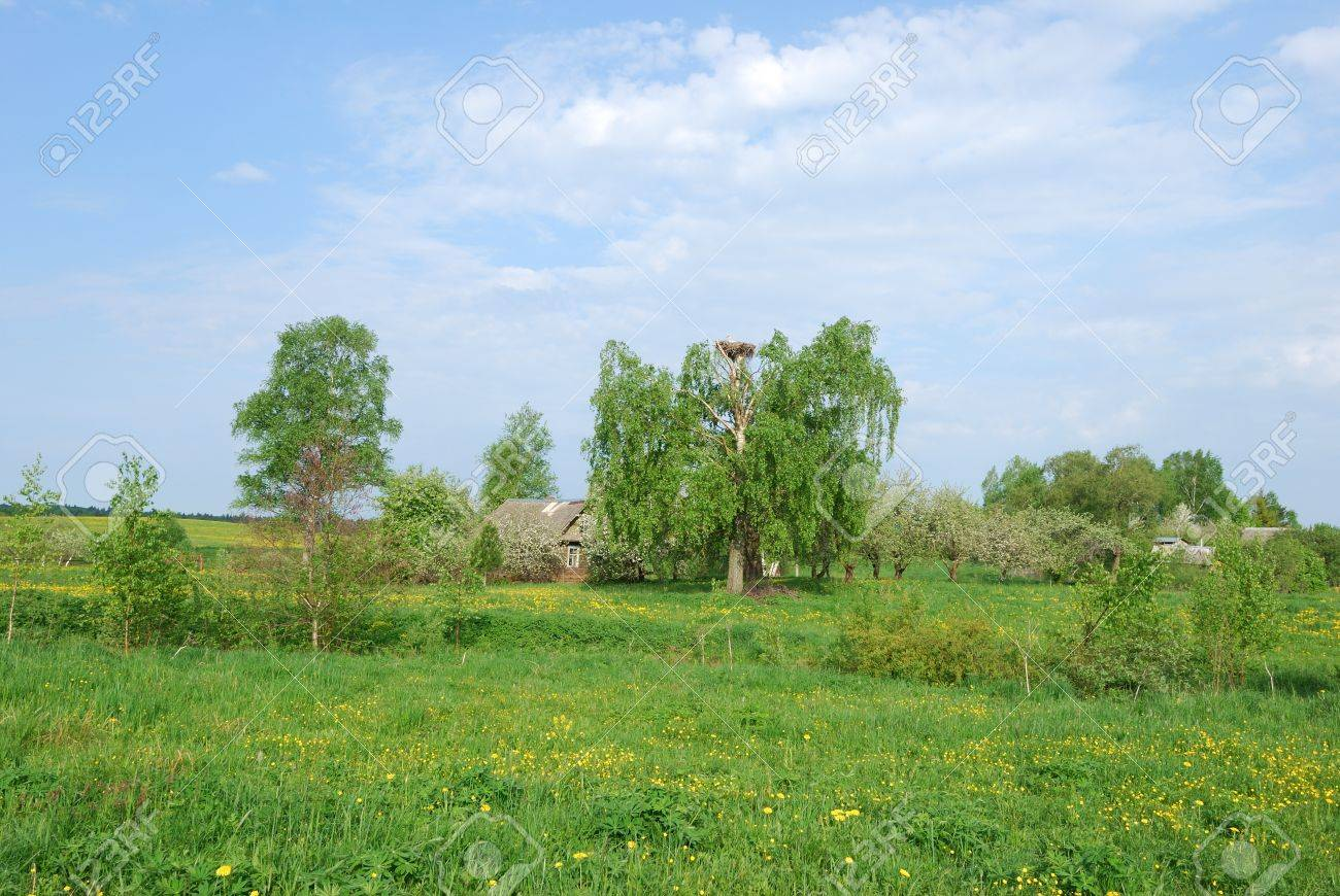 Rural landscape with apple garden,green field and little house Stock Photo - 9857654