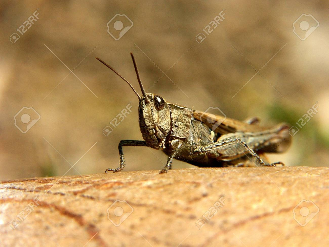 Grass-hopper on a rock in the grass Stock Photo - 6195060