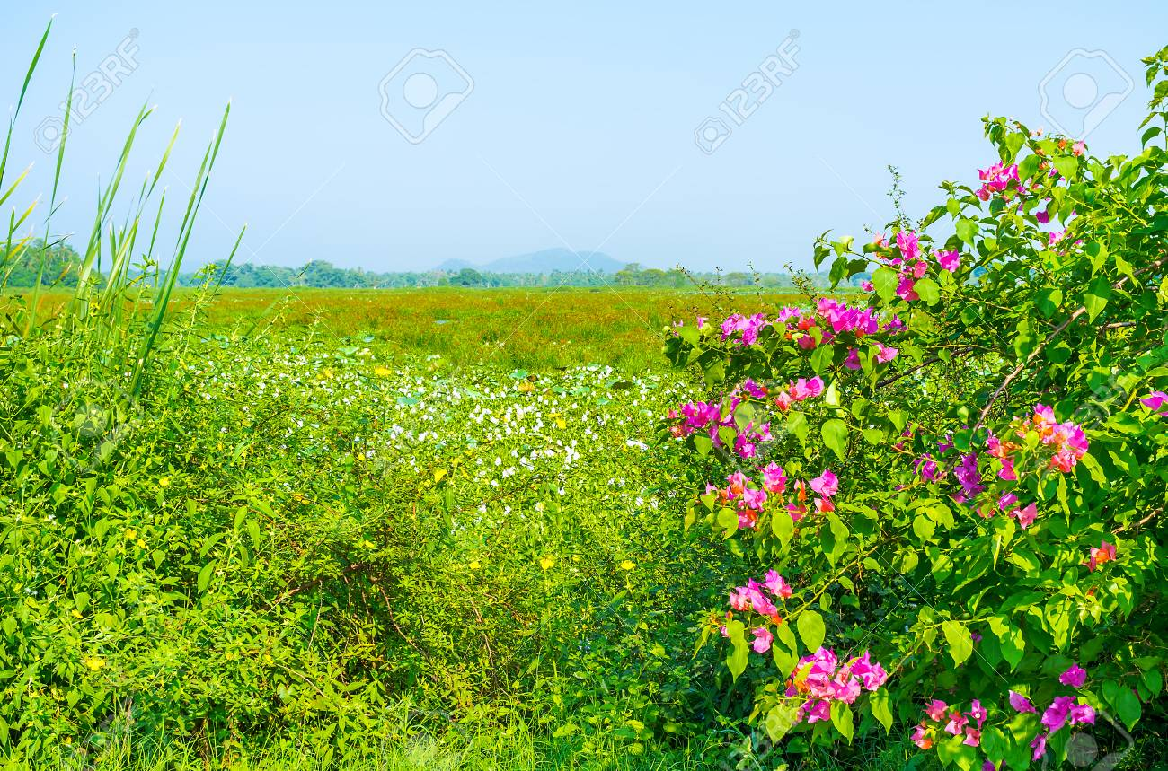 Sri lankan nature boasts scenic landscapes with beautiful flowers sri lankan nature boasts scenic landscapes with beautiful flowers and greenery stock photo 84482189 izmirmasajfo