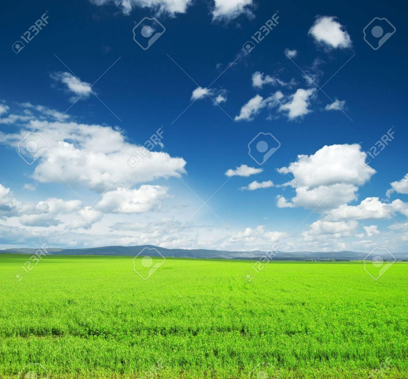 Beautiful summer landscape. Sky and grass. - 9274581