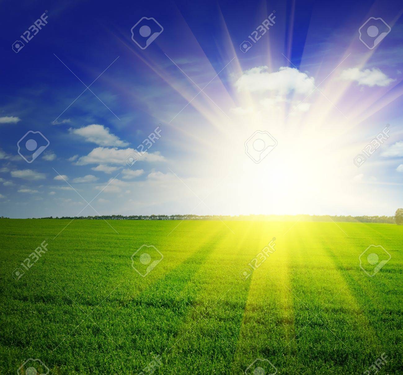 Beautiful summer landscape. Sky and grass. Stock Photo - 9315337