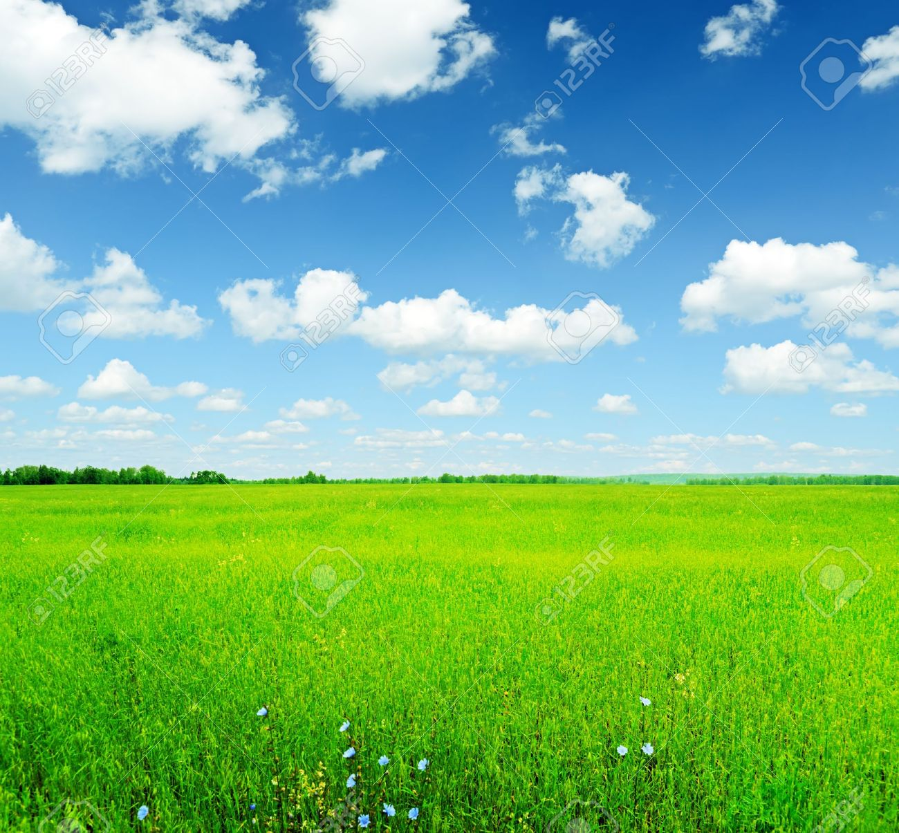 green grass field. Wonderful Green Sky And Green Grass In Green Grass Field U