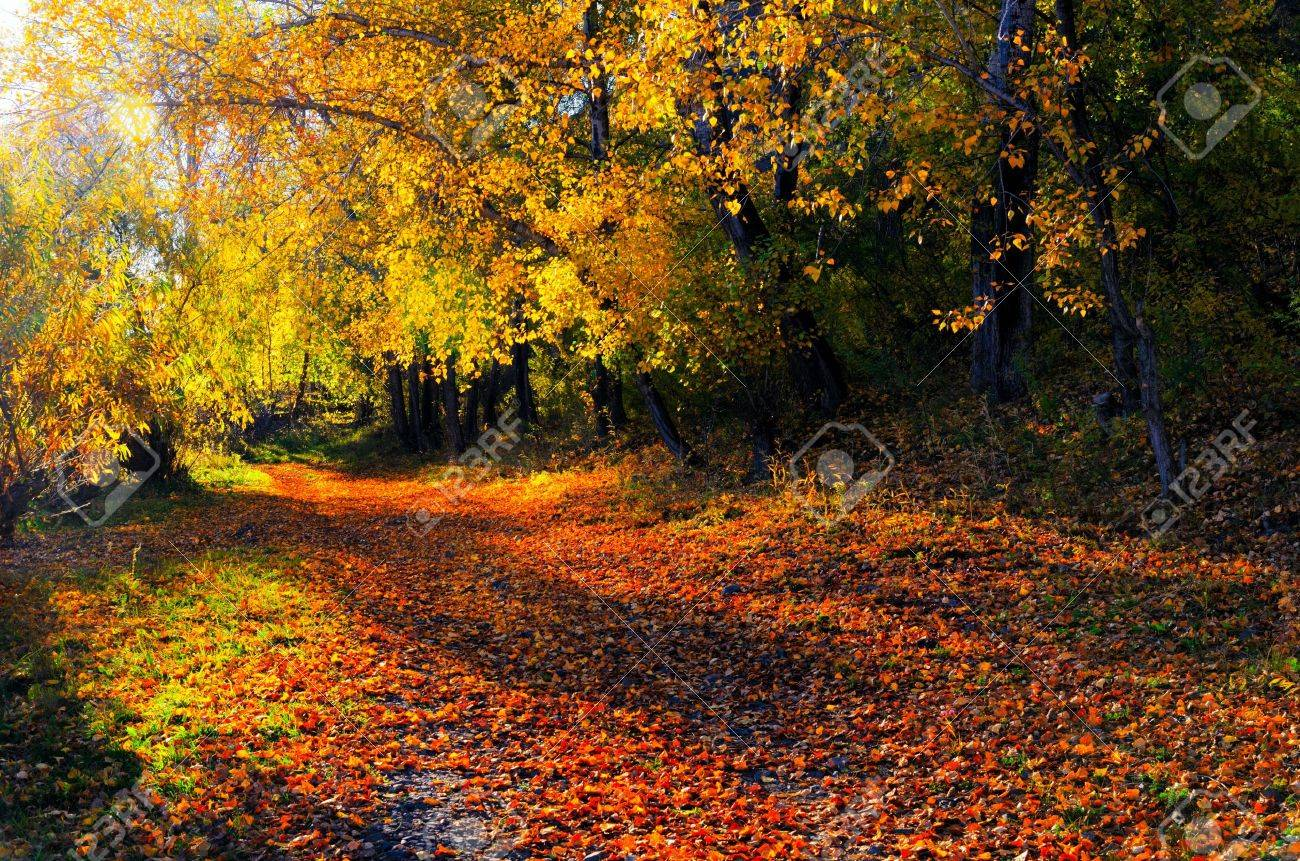 Beautiful autumn landscape. Fall season. Stock Photo - 15584266