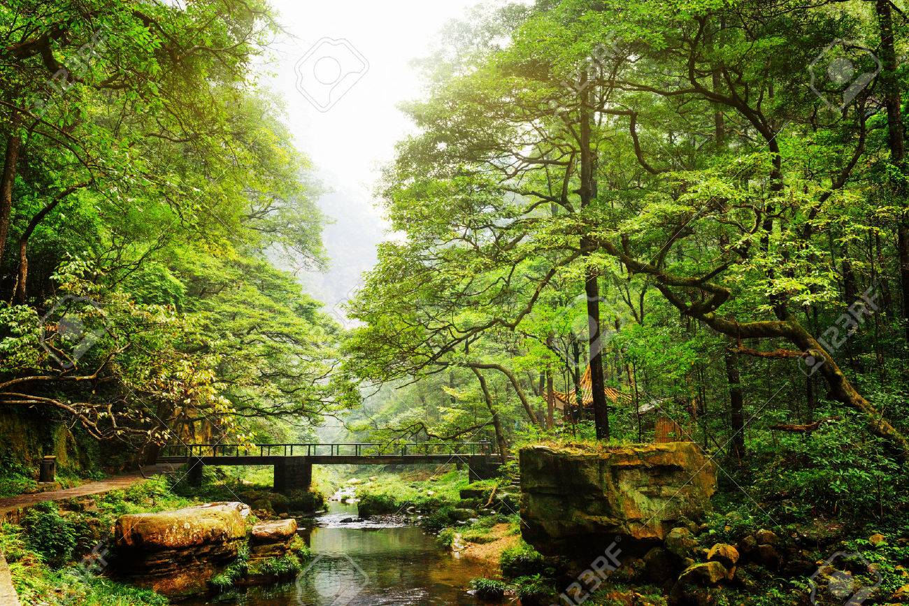 Scenic view of bridge over river among beautiful green woods in the Zhangjiajie National Forest Park, Hunan Province, China. Amazing summer landscape. - 54534146