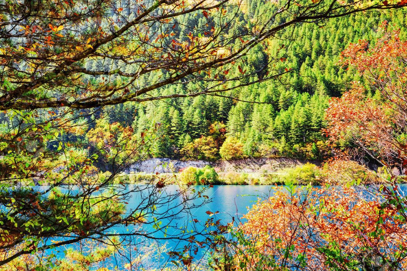 Beautiful Autumn View Through Foliage Of Trees. Azure Water Of ...