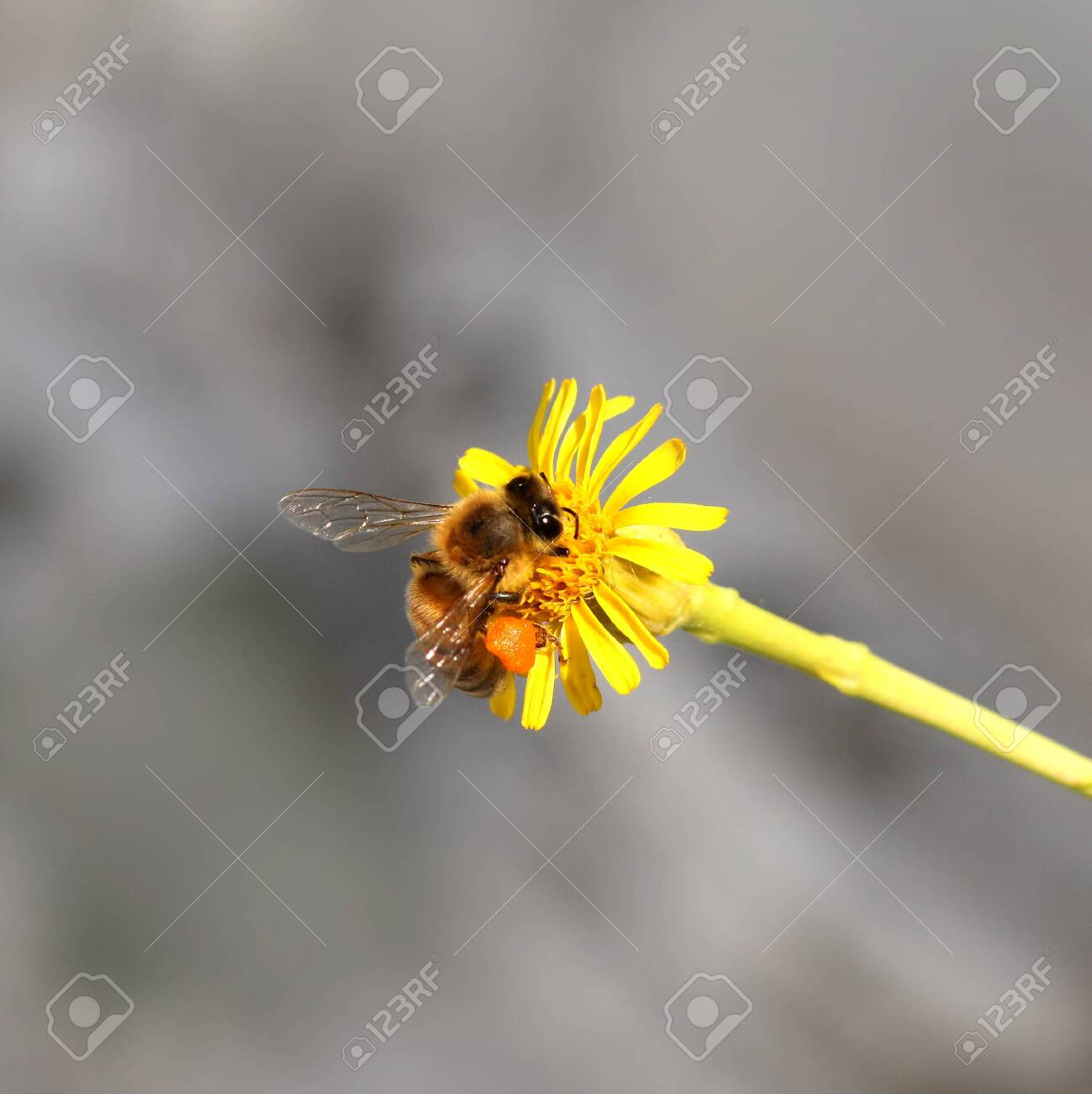 bee on the flower - 138635793