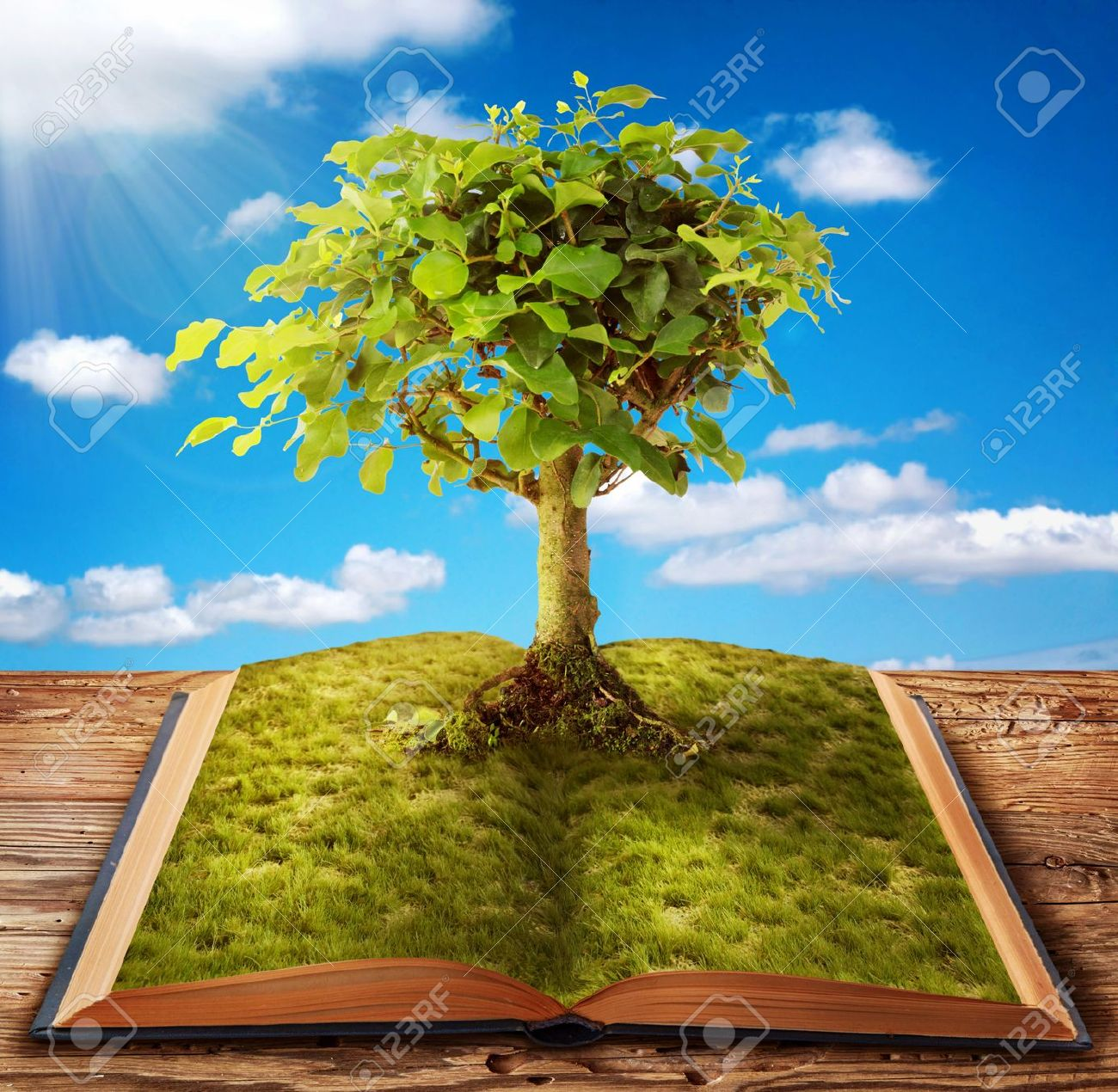 Tree of knowledge growing out of book Stock Photo - 11872864